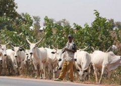 Herdsmen Attack:Security Operatives Shot One, Injure Many At Uwheru